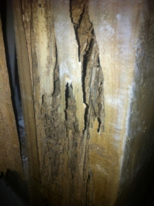termite damage to frame